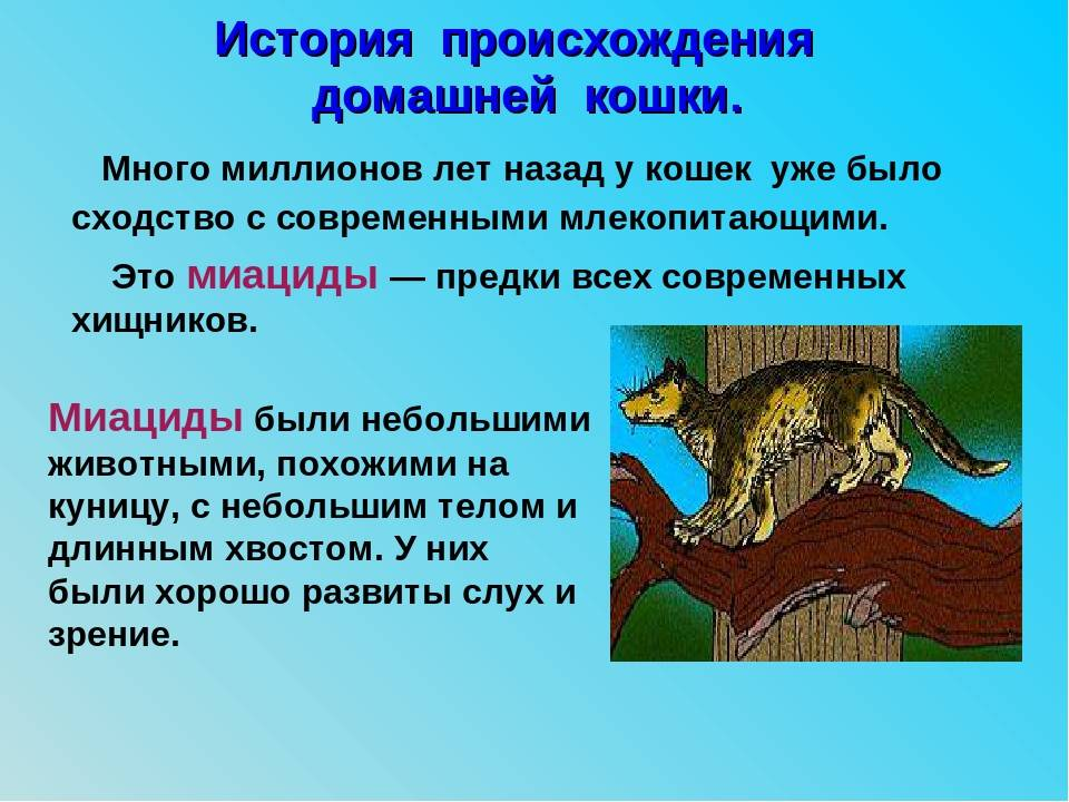 История кошек - происхождение и одомашнивание кошек, кошки в истории египта, россии, англии, японии, китае, востока, происхождение пород, всемирный день кошек - всё о кошках и котах