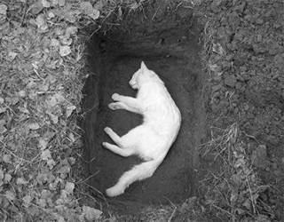 Размер ямы чтобы похоронить собаку. как правильнее похоронить собаку