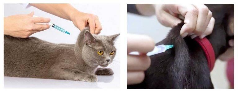 Глобфел 4 для кошек: инструкция по применению, показания и противопоказания, аналоги, отзывы