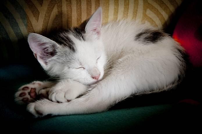 Снятся ли кошкам кошмары...: дневник пользователя бефанта
