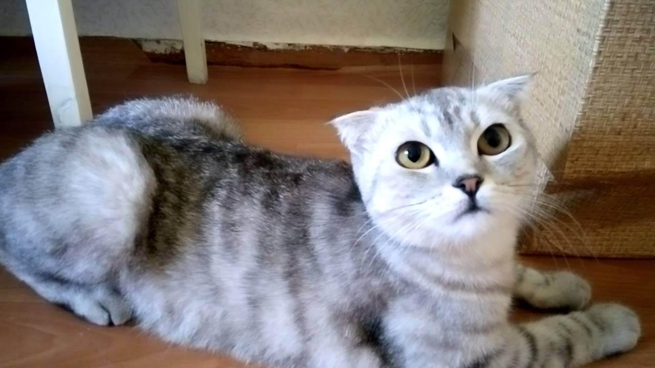 Кошка просит кота, орет: как ее успокоить в домашних условиях, что делать?