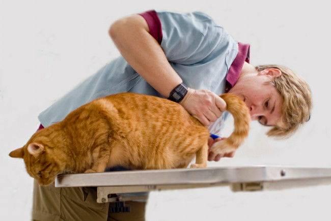 Причины недержания кала у кота и что делать при появлении проблемы?