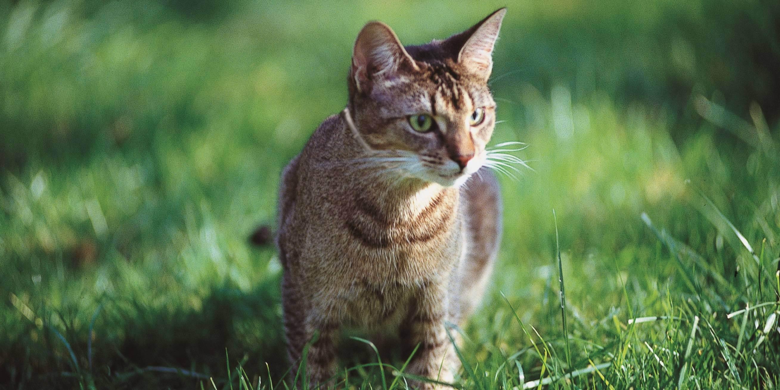 Тепловой удар у кошек: симптомы и лечение