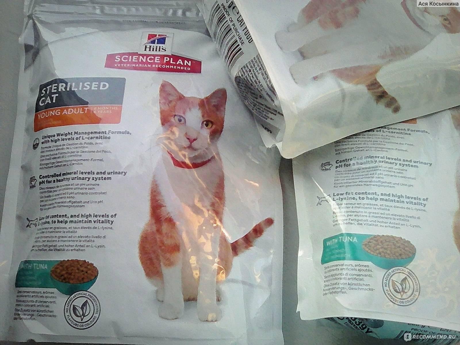 Какой корм для кошек самый лучший по мнению ветеринаров: советы, рейтинг