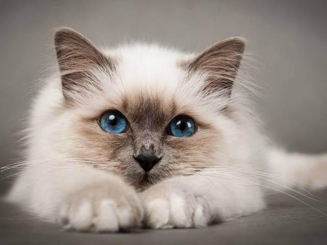 Народные приметы и поверья про кошек