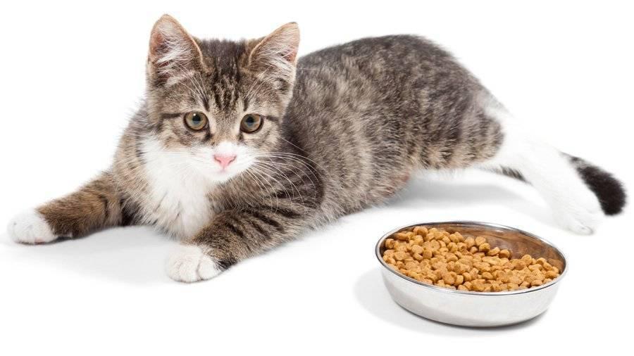 Как повысить аппетит у кошки | причины, что делать если пропал