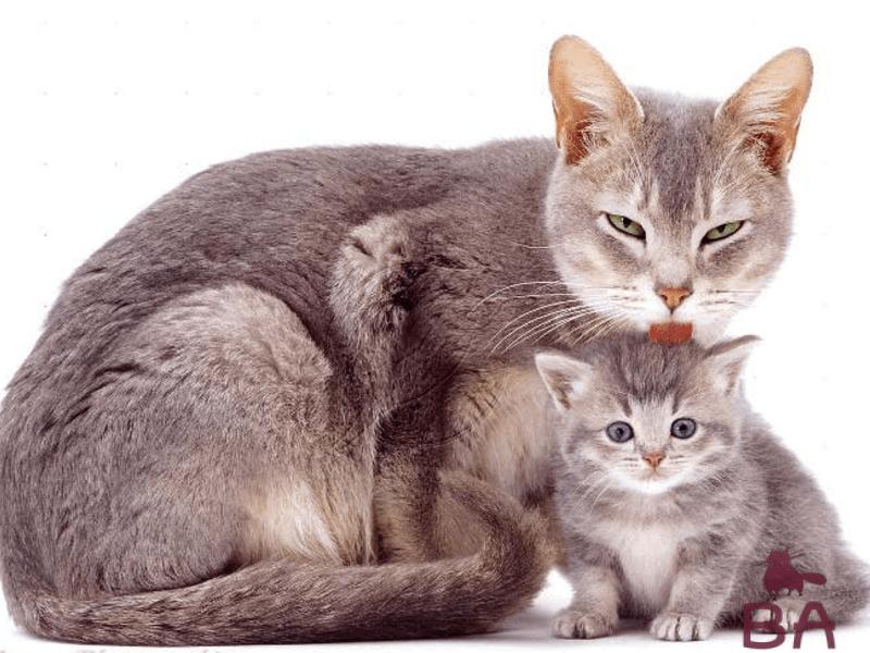 Почему кошка ест своих котят | мои домашние питомцы