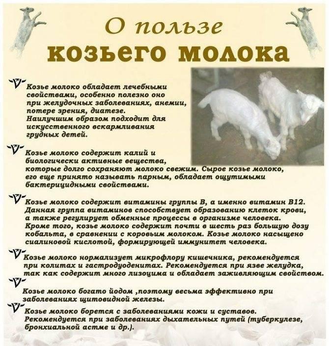 ᐉ можно ли кошкам молоко: почему нельзя давать котятам, чем заменить - kcc-zoo.ru