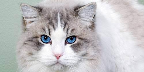 Сонник собственная кошка. к чему снится собственная кошка видеть во сне - сонник дома солнца