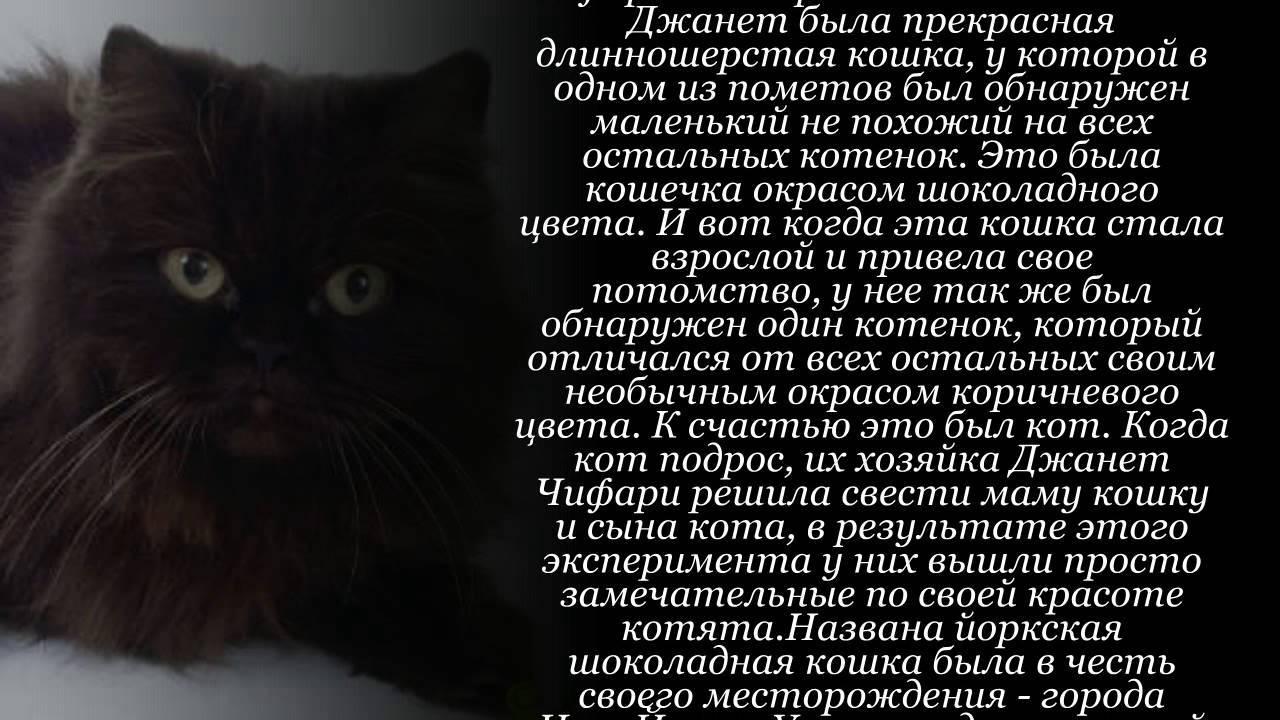 Сноу-шу