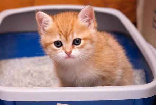 Наполнители для кошачьих туалетов: как выбрать самый лучший?