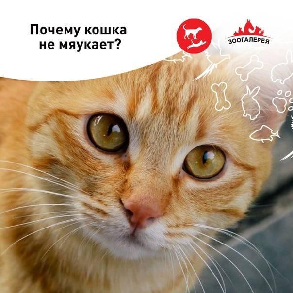 Котенок 5 месяцев постоянно мяукает. почему кошка орет днём и ночью — причины и методы решения проблем. что делать, если кот не спит по ночам, ходит и мяукает - новая медицина