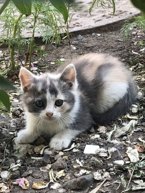 Народные приметы и суеверия про трехцветных кошек
