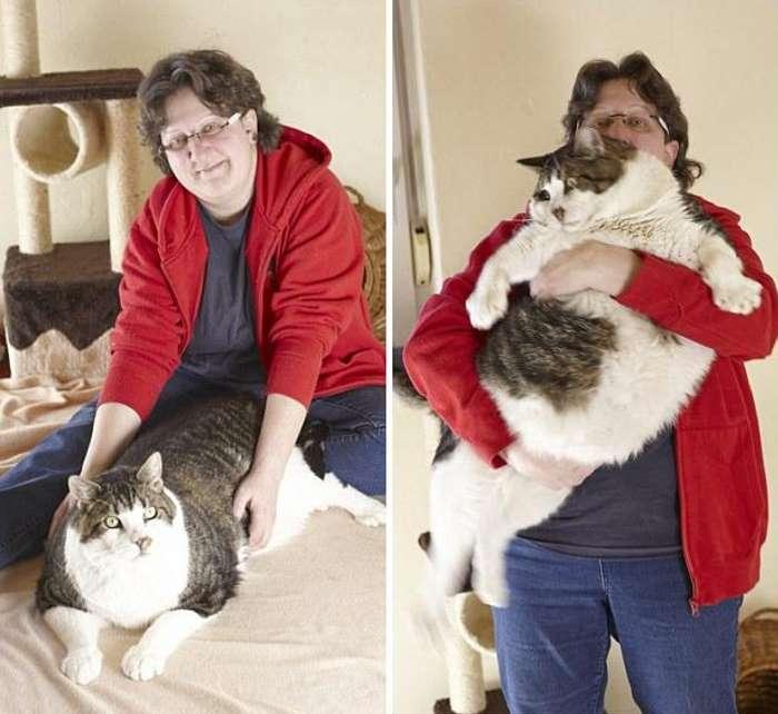 Топ-7 котов из книги рекордов гиннеса | про кошек | яндекс дзен