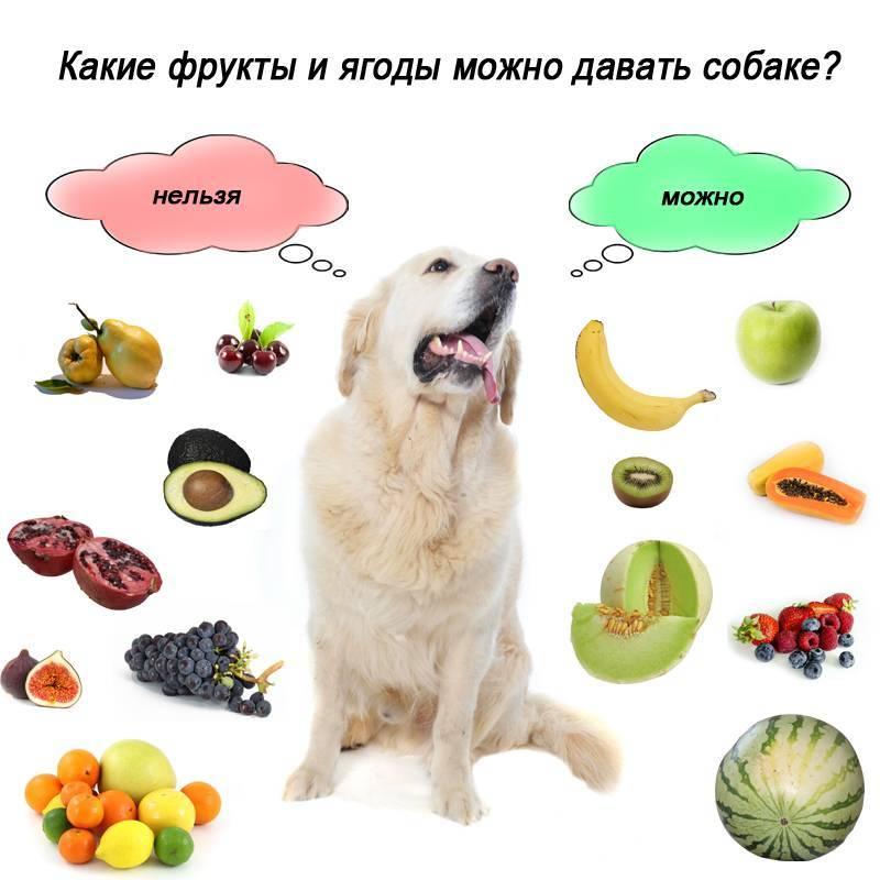 Какие овощи можно давать кошкам?