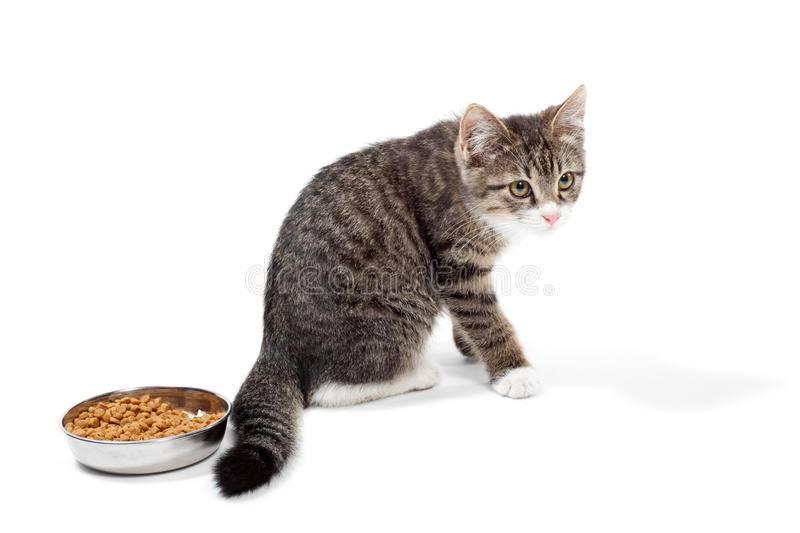 Почему котенок не ест, что делать, как накормить худого малыша с плохим аппетитом?