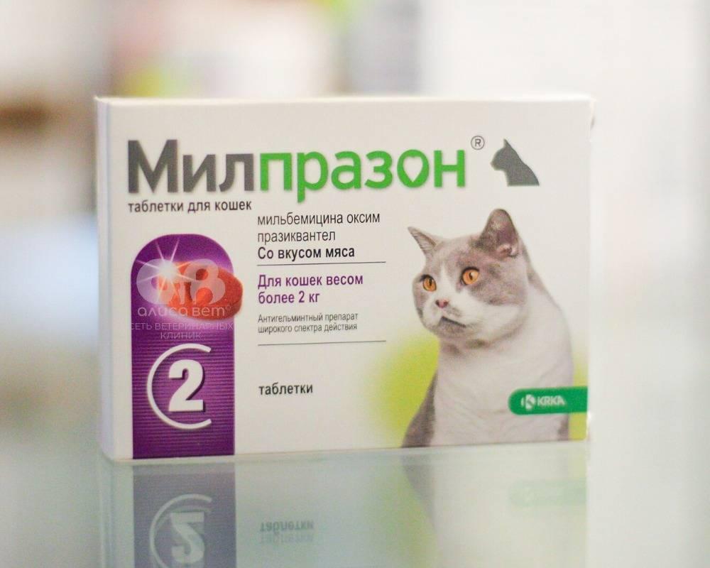 Дегельминтизация перед вакцинацией: за сколько дней до прививки давать глистогонное кошке