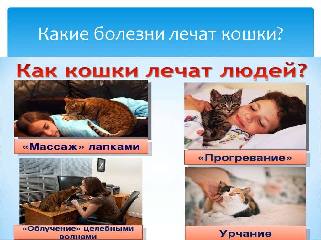 9 опасных для человека болезней, переносчиками которых являются кошки | в тренде