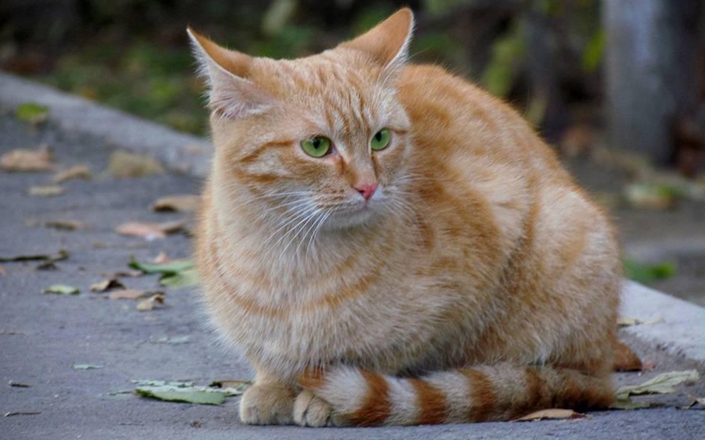 Беспородные кошки: описание, виды, характер и повадки