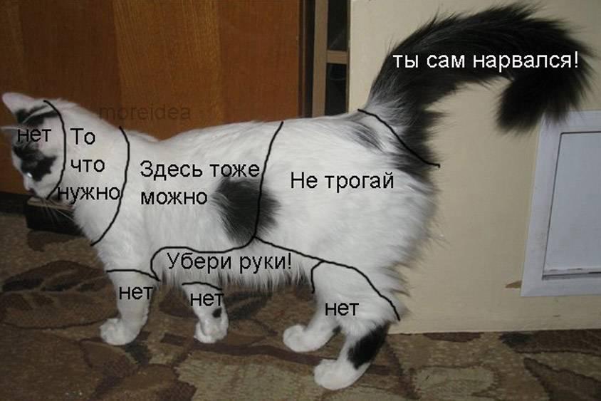 Что делать если у кошки болит живот в домашних условиях видео