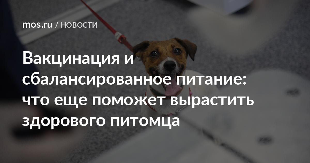 Ветеринарная стоматология в москве | прием ветеринарного врача-стоматолога