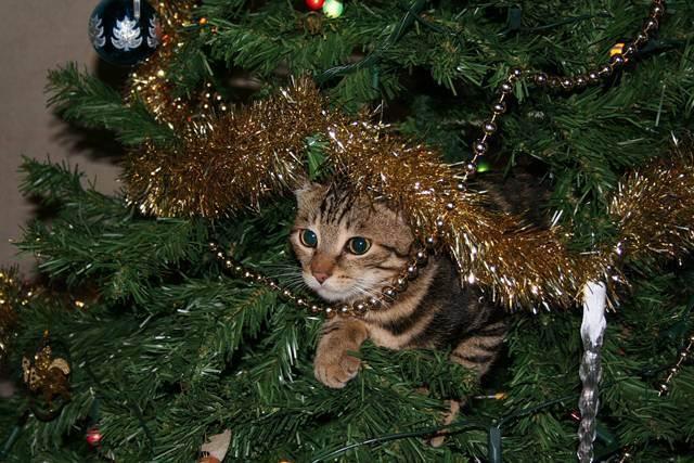 Что делать, если кот съел дождик с елки? - экспресс газета