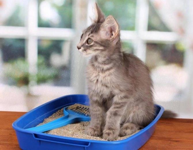 Как отучить кошку гадить где попало - советы и способы
