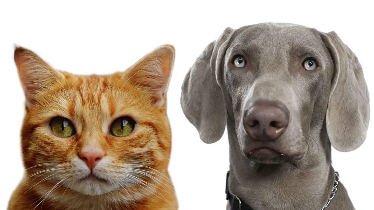"""Кого лучше завести кошку или собаку? — обсуждение в группе """"разговоры обо всем""""   птичка.ру"""