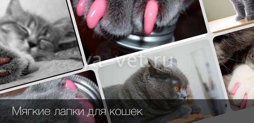 Мягкие лапки для кошек и котов: отзывы