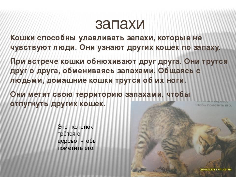 Какой запах не любят кошки - полезные советы какой запах не любят кошки - полезные советы