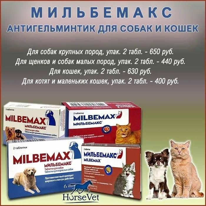 Мильбемакс: инструкция по применению для кошек, состав, показания