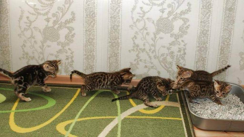 Как приучить кота спать с хозяином как приучить кота спать с хозяином