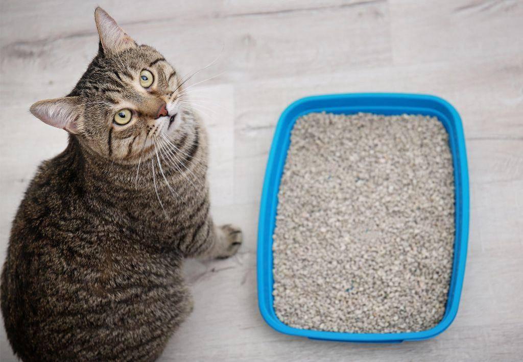 Что делать, если кошка ходит в туалет мимо лотка?
