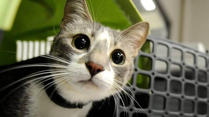 Сделали кошке прививку от бешенства