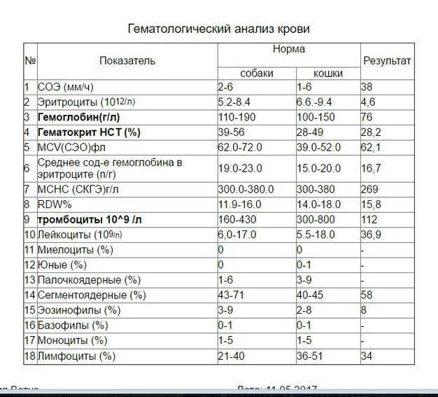 Кошки анализ крови расшифровка у взрослых