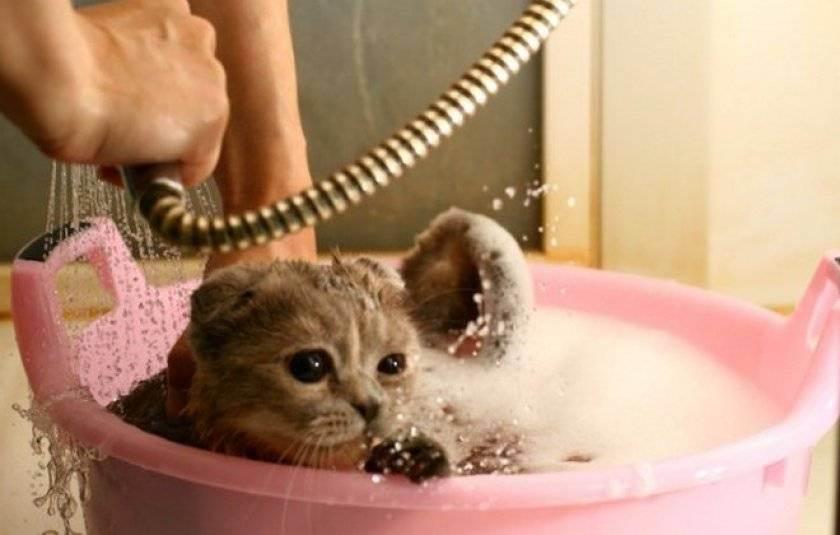 Как помыть котёнка первый раз: знакомство с водой без стресса