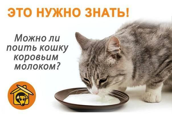 Можно ли котам давать молочные продукты