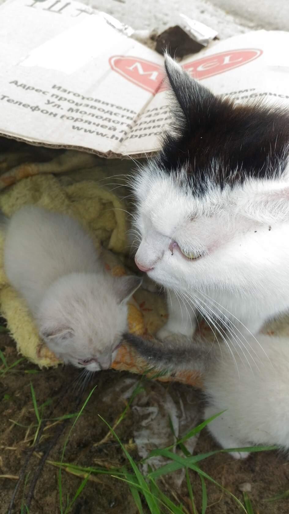 Течка у кошек: сколько длится и как успокоить. возраст наступления половой зрелости, признаки и периодичность течки