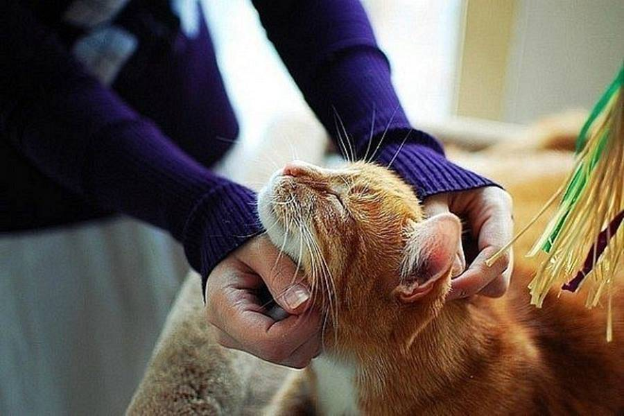 У кошки болит живот и не может ходить в туалет