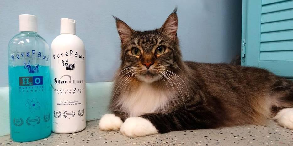 Как почистить нос кошке: правильное проведение процедуры, необходимые средства