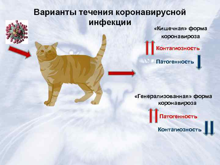 Коронавирус у кошек: симптомы и лечение