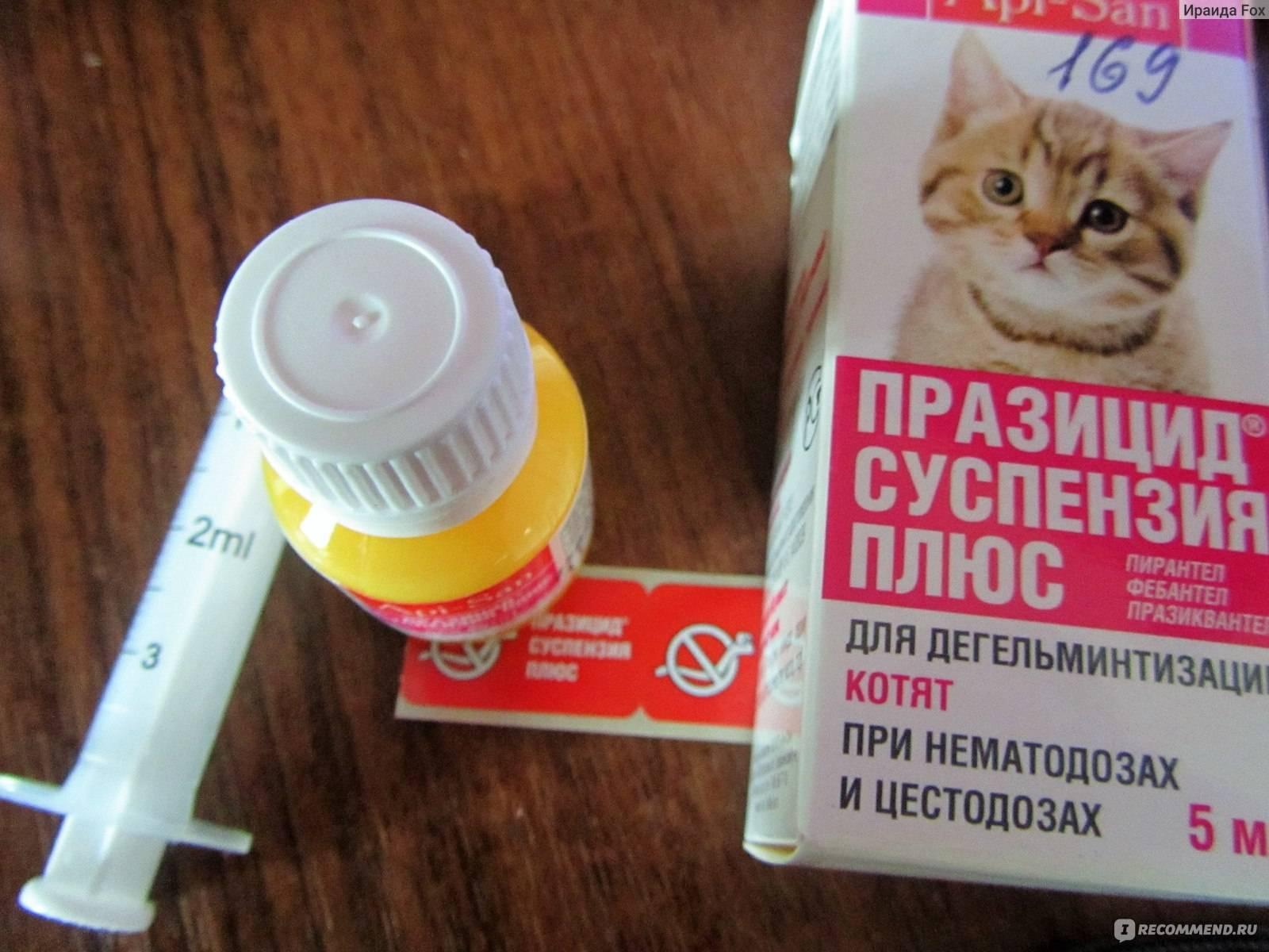 Глистогонное для кошек: какие лучше, препараты, капли на холку