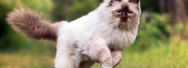 Чип для кошек