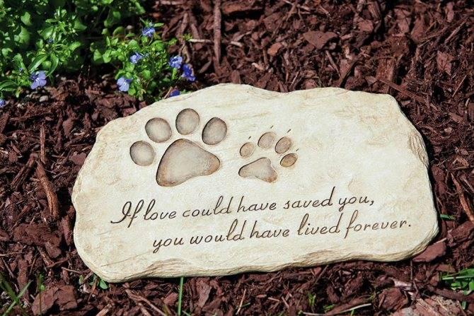 Как правильно похоронить кошку чтобы ей было хорошо | my darling cats