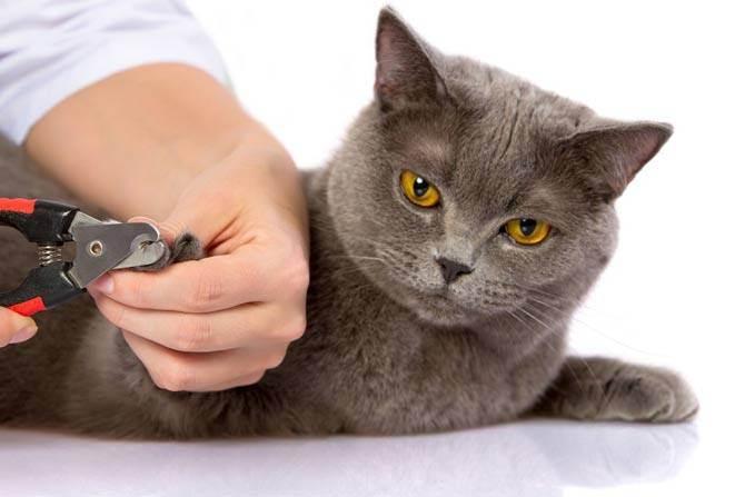 Удаление когтей у кошек: преимущества и недостатки операции «мягкие лапки», техника проведения процедуры, последствия, отзывы хозяев