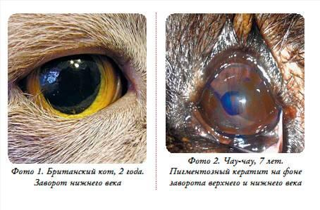 Глаза кошки: строение, какие цвета видят, болезни