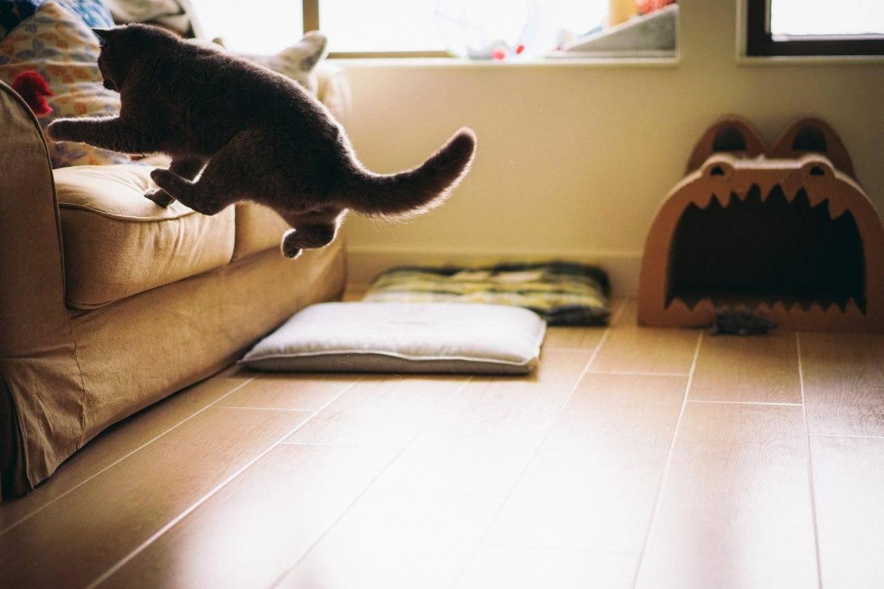Как приучить кошку к домику