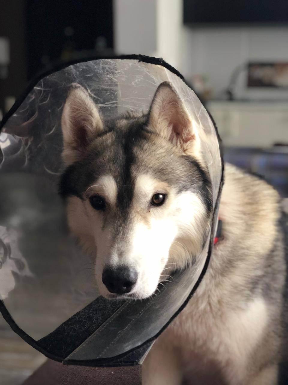 Кастрация или стерилизация собаки, в чем отличия и что лучше