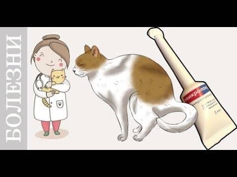 Как лечить запор у кошки — правила применения слабительных средств