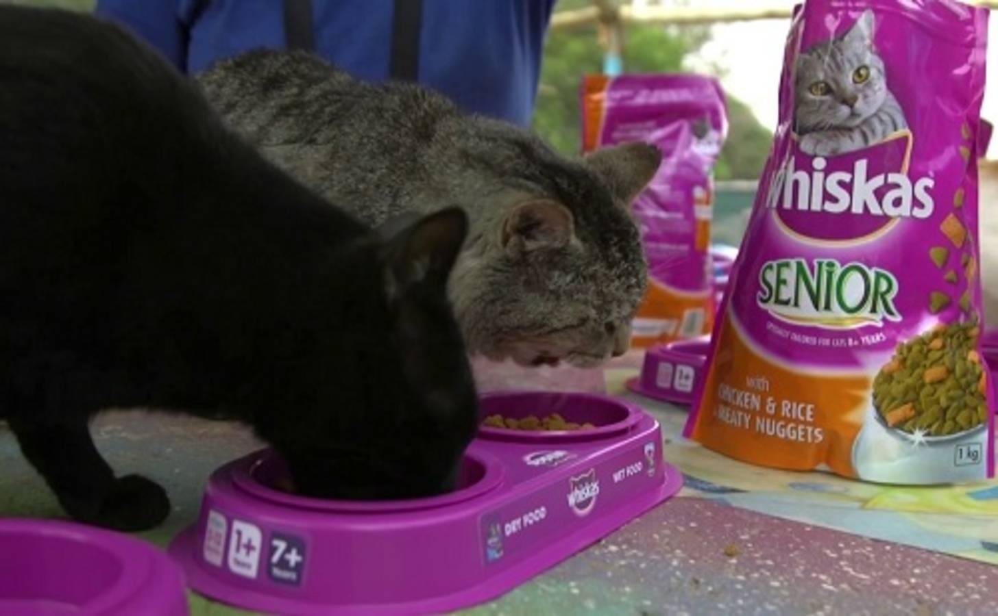 Что лучше вискас или фрискас – какой корм более безопасен для кошек?